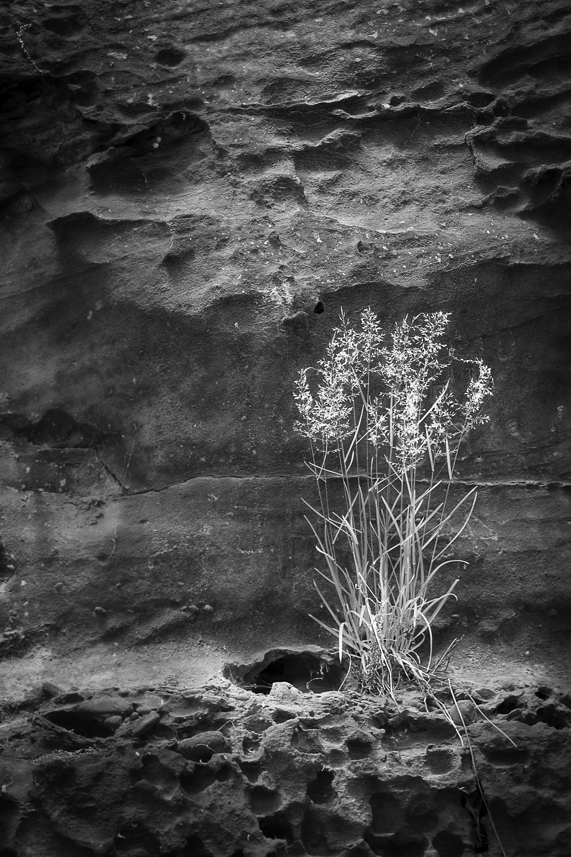 Rock Side Planter smlr