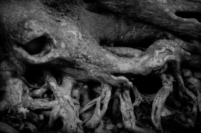 Roots Monster