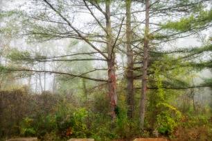 Indi go-go fog