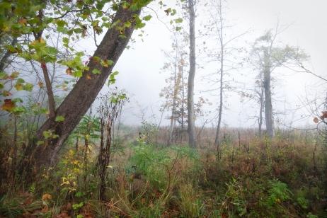 Leaning Toward Autumn