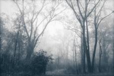 Mono-fog-o-chrome
