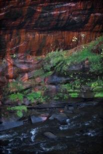 Pollock Inspired Nature