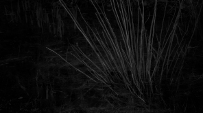 Light Spines alt crop