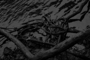 Roots In Water II