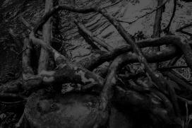 Roots In Water III