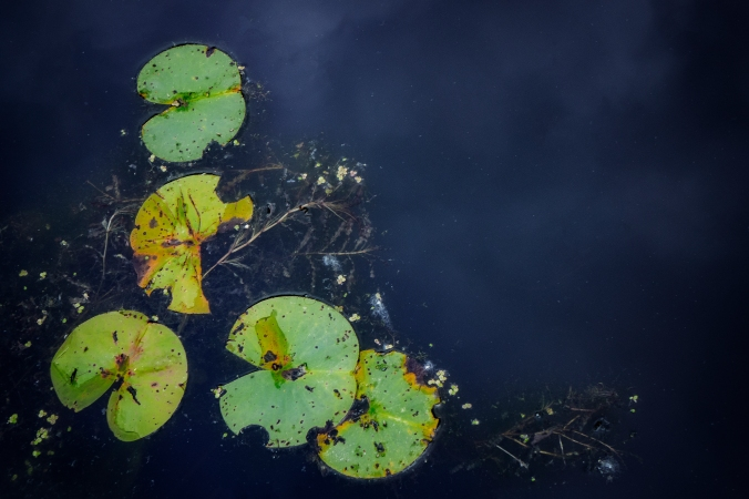 Composing Decomposing Lilypads