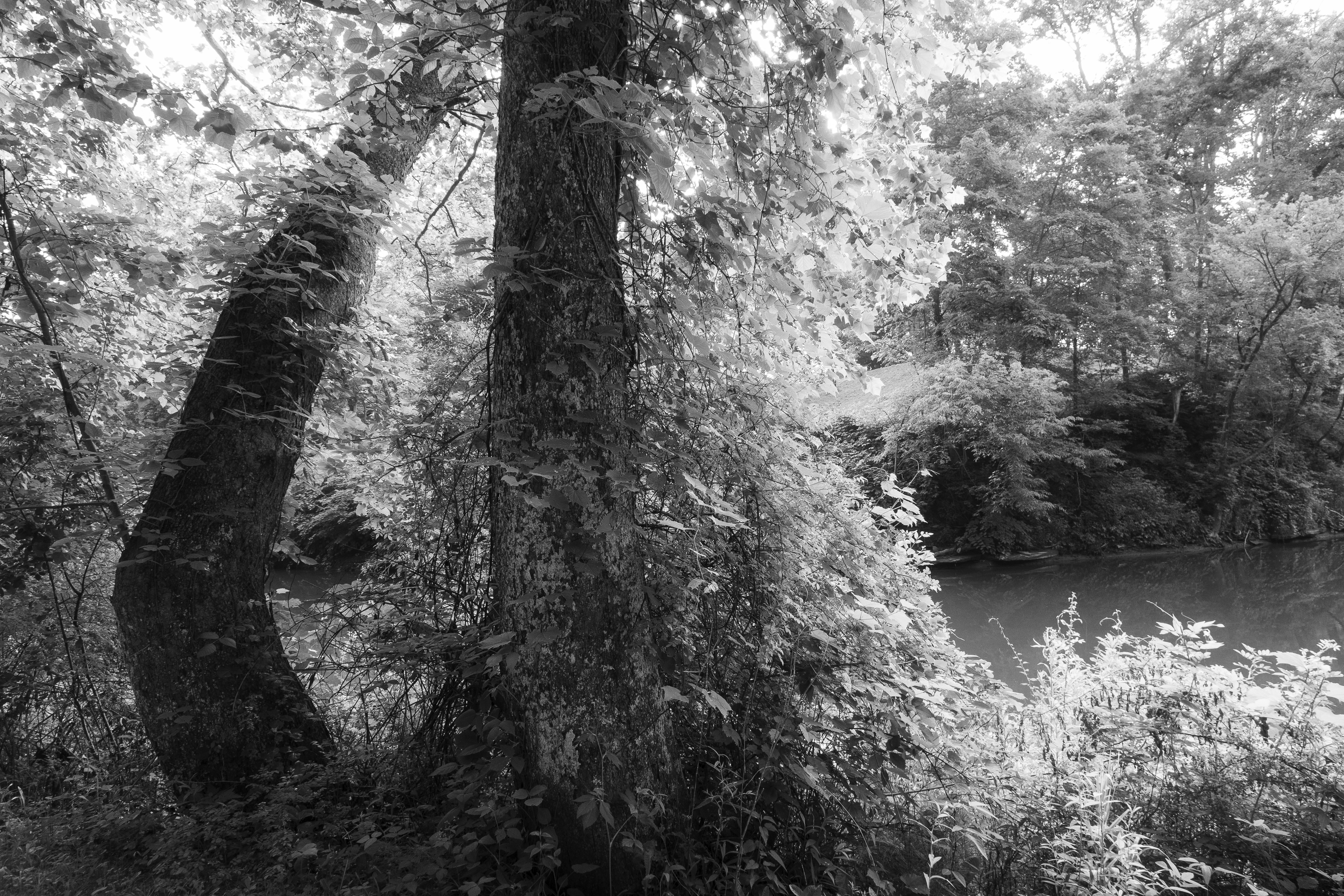 Rivers Side