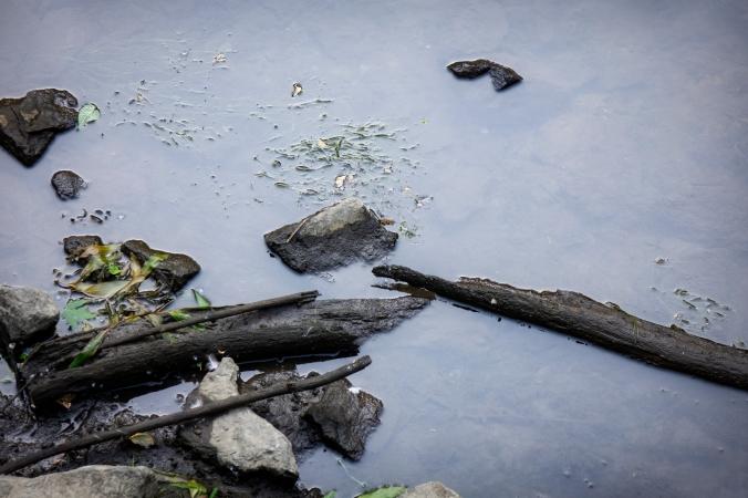 Water Logs