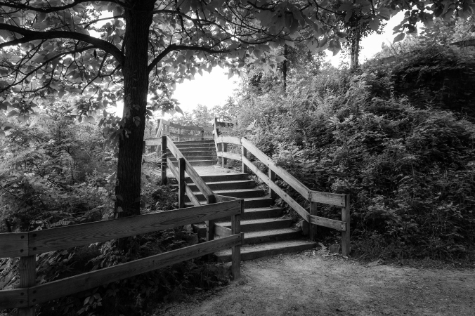 Stairway To The Treetops