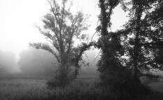 Trees & Fog I