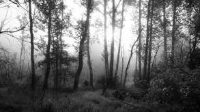 Trees & Fog II