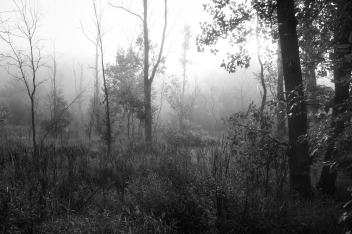 Trees & Fog III