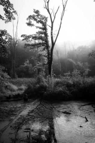Trees & Fog IX