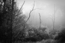 Trees & Fog VI