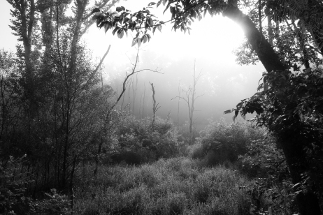 Trees & Fog VIII