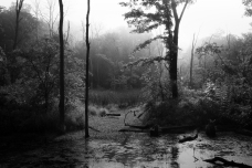 Trees & Fog X