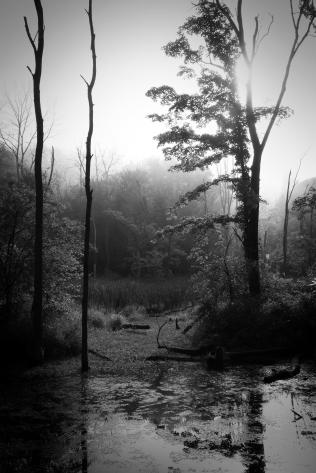 Trees & Fog XI