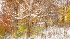 First Snow - Branching Out