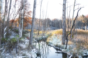 First Snow - Creekside