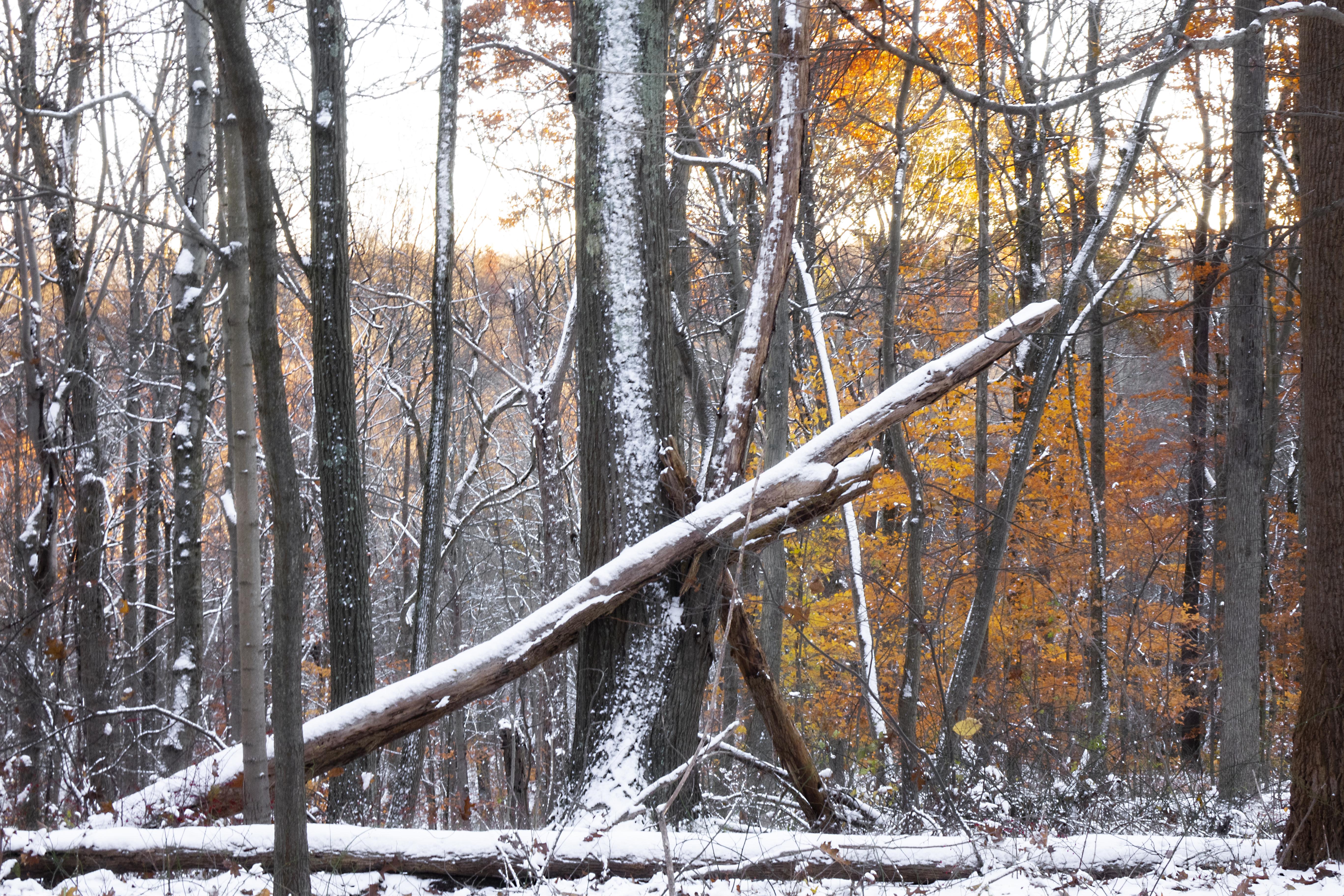 First Snow - Fallen