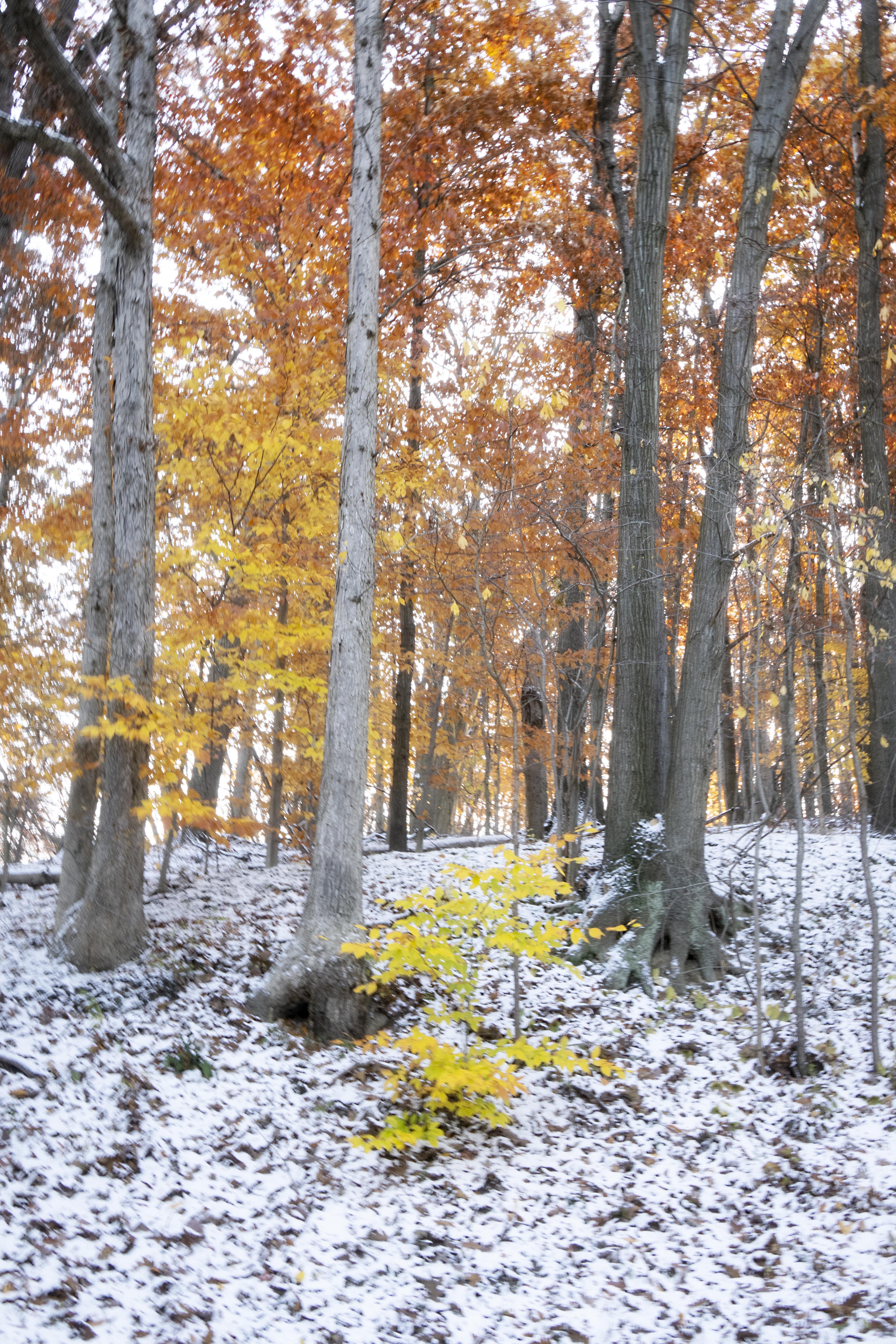 First Snow - In Autumn
