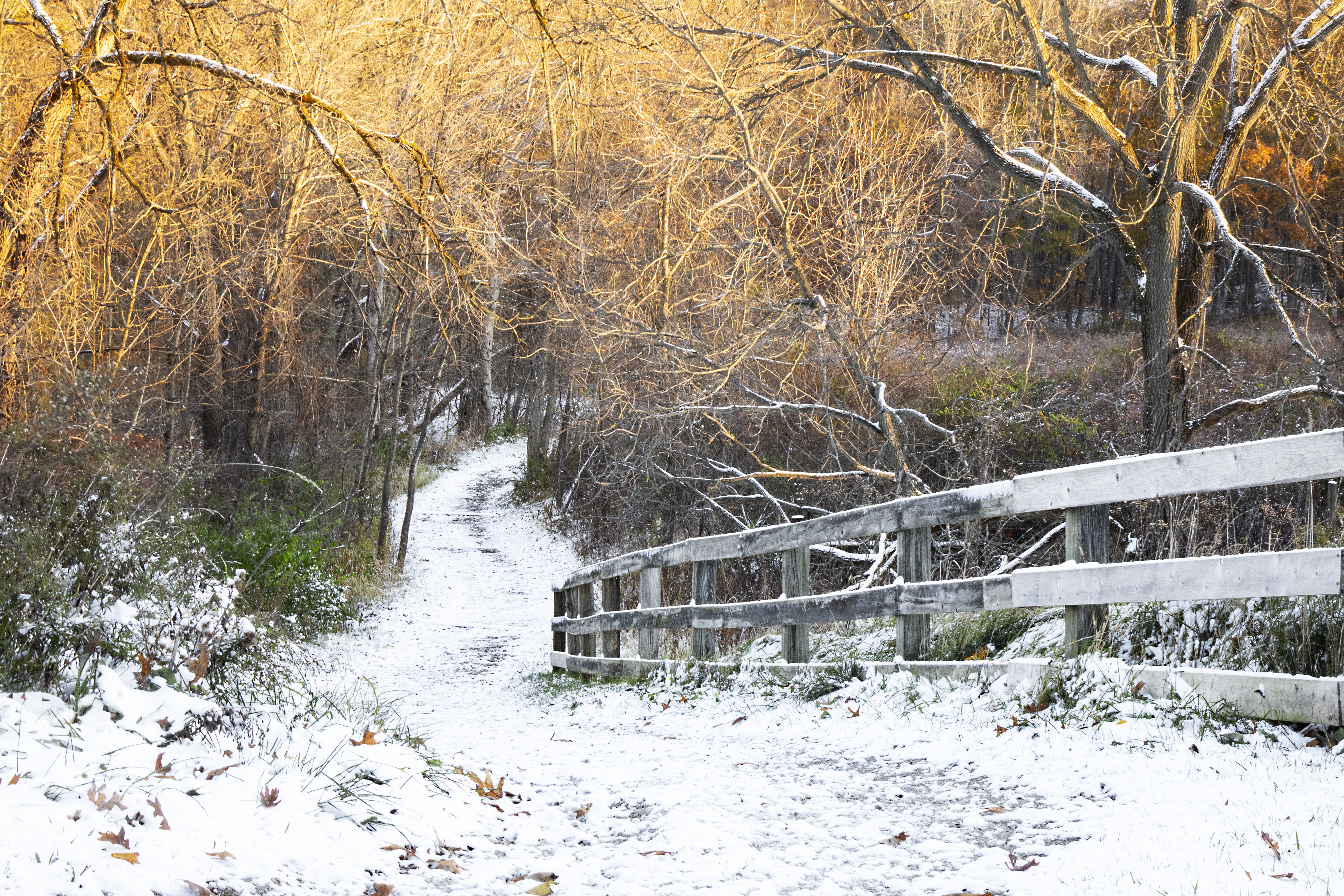 First Snow - Morning Pathways