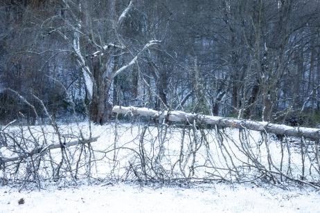 First Snow - Morning's Broken Blues