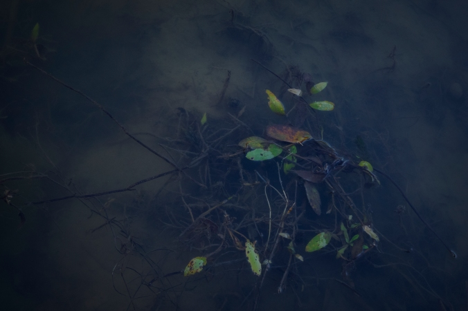 In The Shallows II