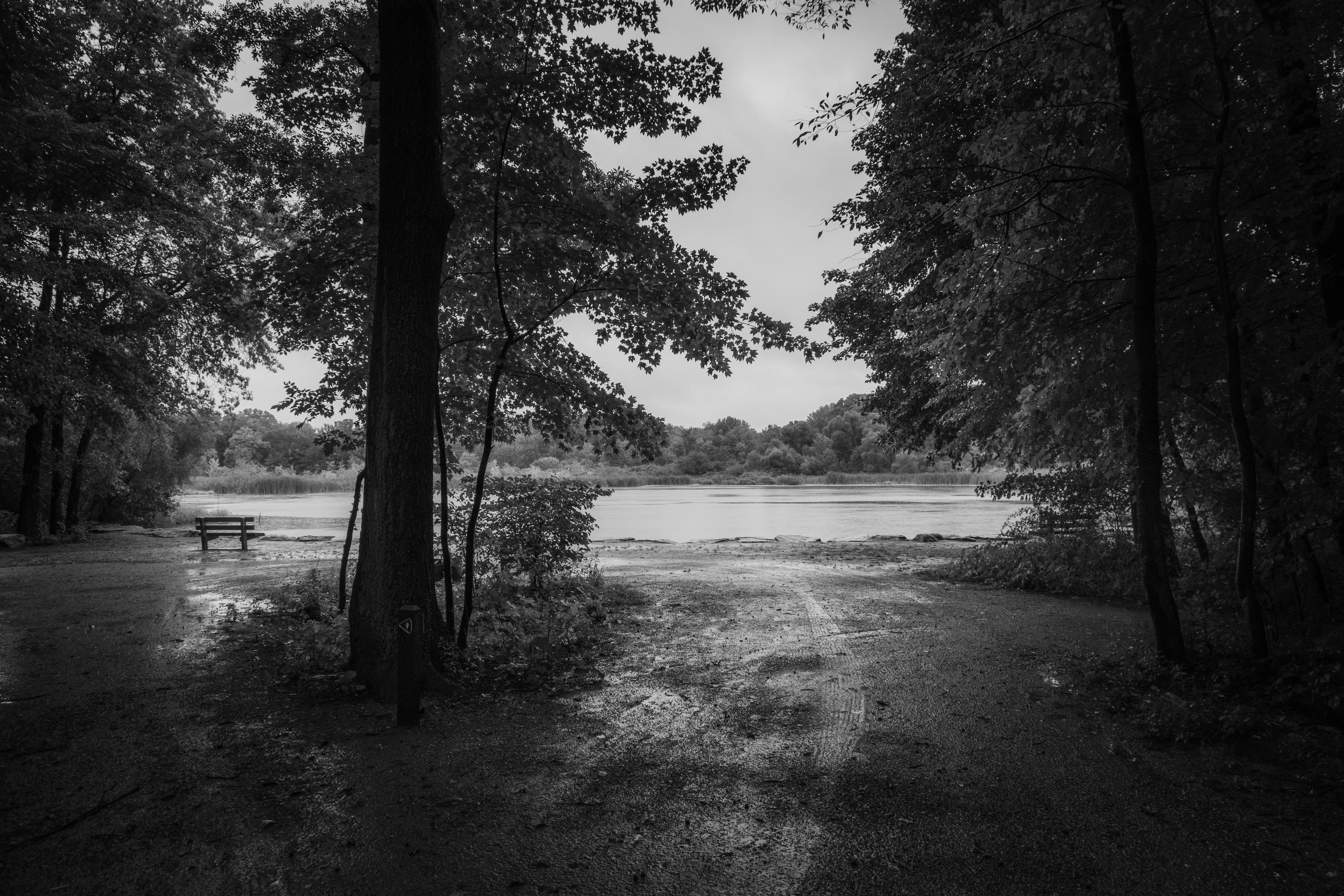 Late Summer Rain - Among The Trees