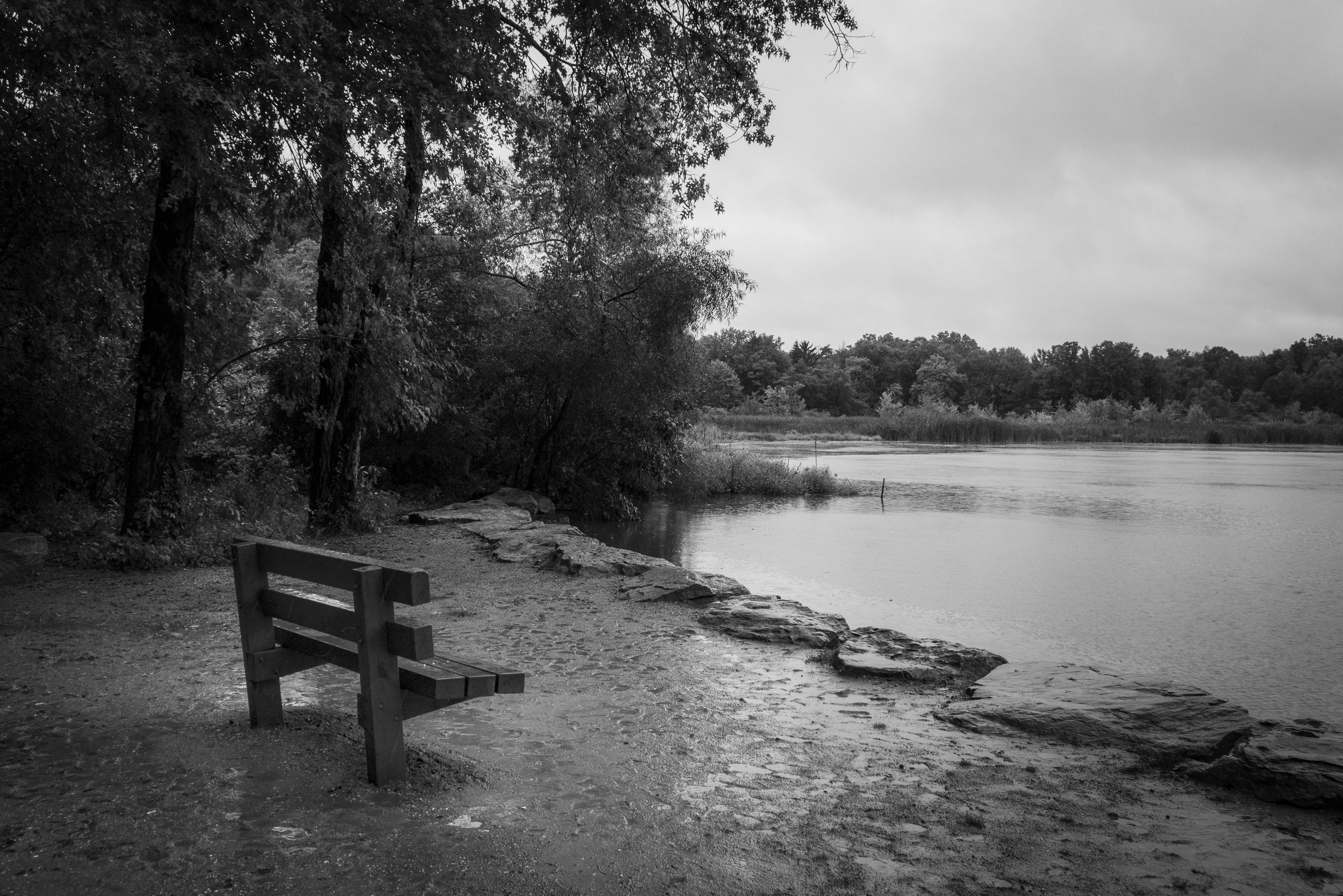Late Summer - Wet