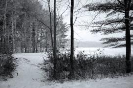 Through Winter Trees