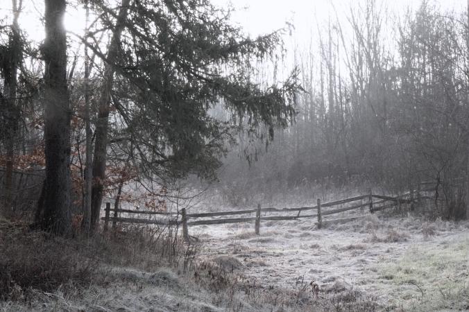 frosted sunrise fencerow