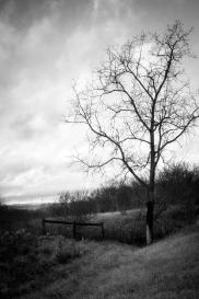 tree & fence