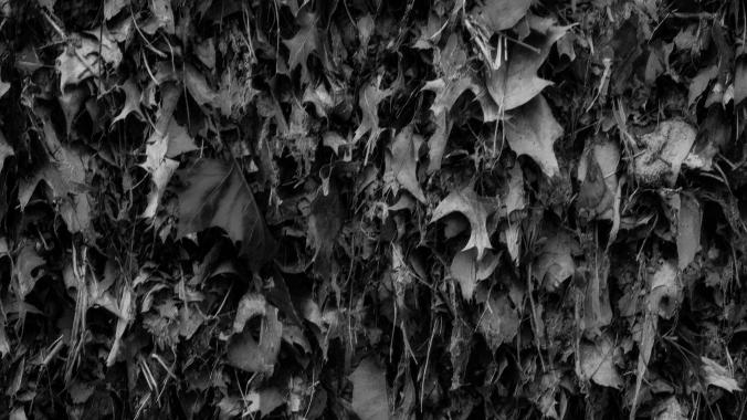 Leaf Clutter