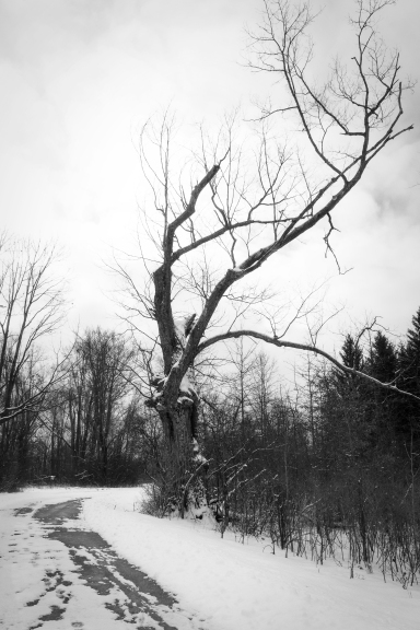 Tree Along The Lane