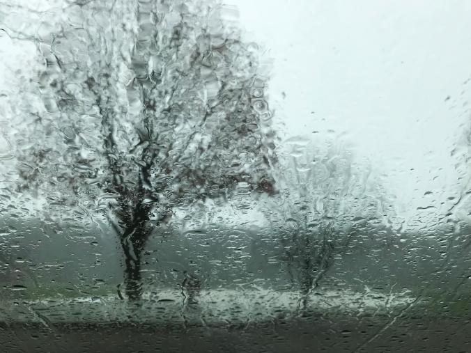 when trees rain