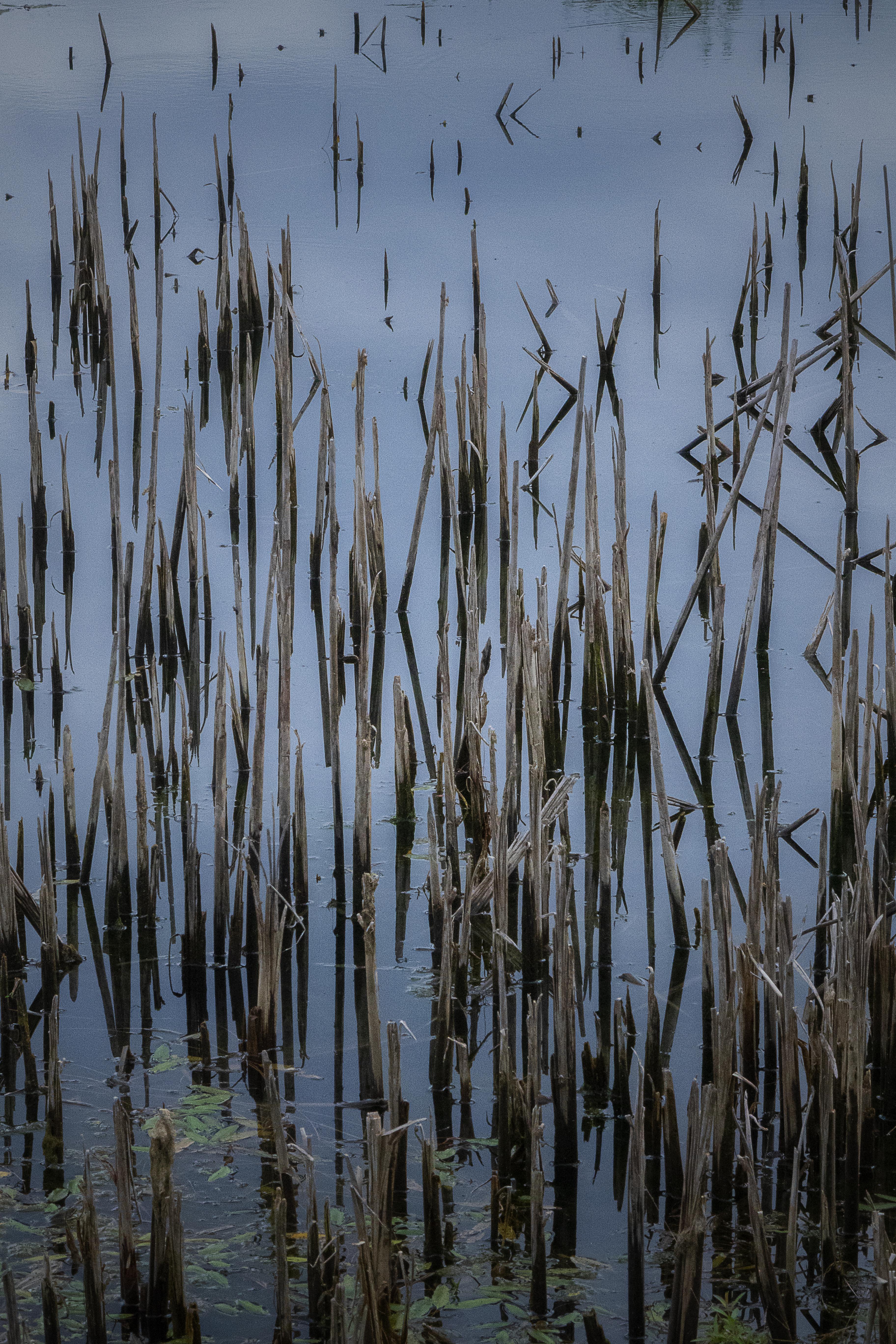 The Morning Sings Through Broken Reeds