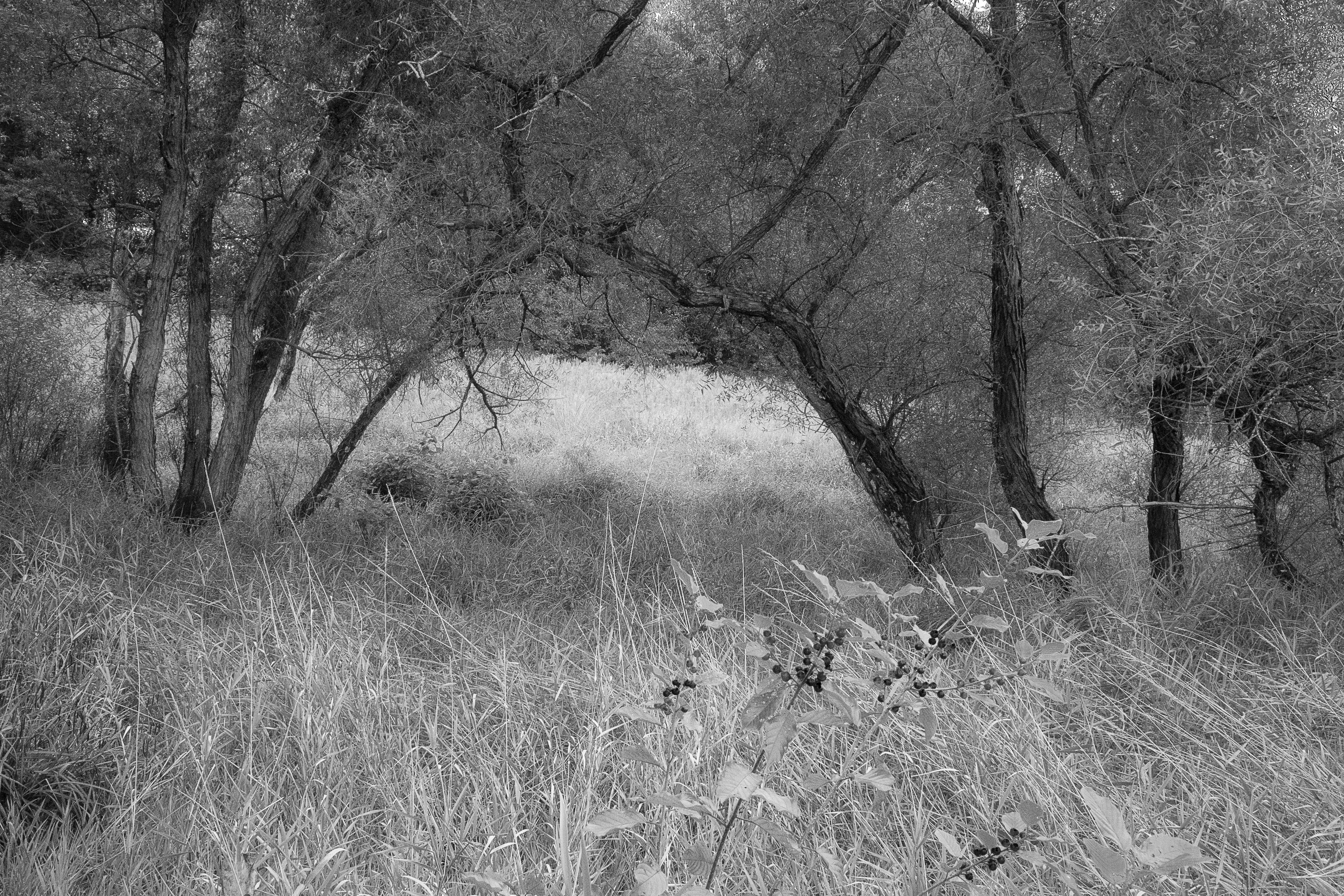 Through The Trees B&W