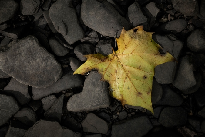 Leaf & The Heart Of Stone