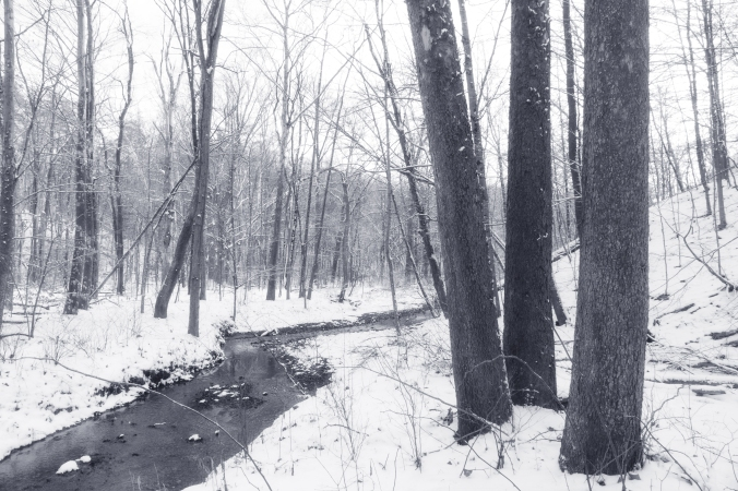 Creek Through Winter