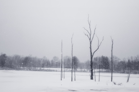 in and across a frozen marsh