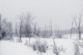 Marshlands in winter