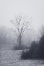Mystery & The Mist