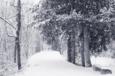 walking in snowdrops