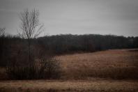 Meadowlarking