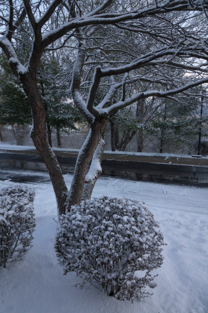 this morning out my window 1